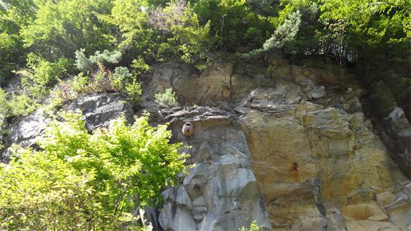 崖にスズメバチの巣を発見