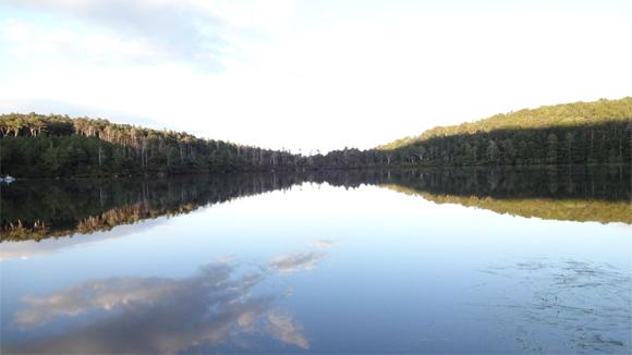 八千穂高原の白駒池