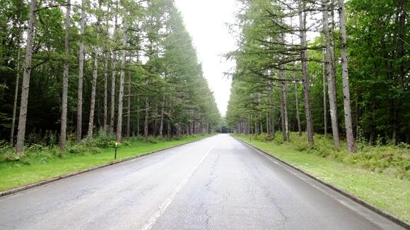 八ヶ岳・並木道