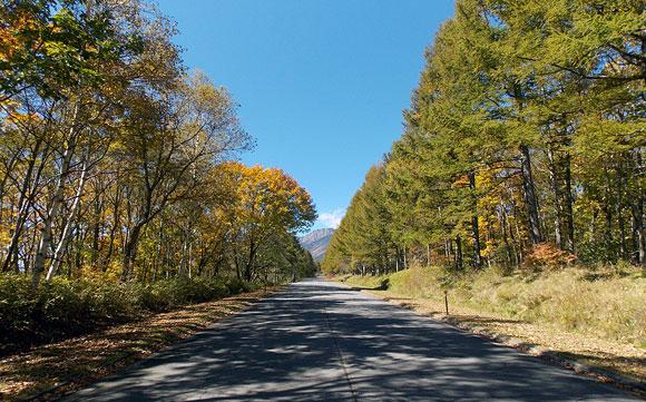 八ヶ岳の並木道