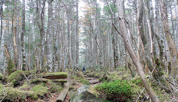 長野県北八ヶ岳・丸山と高見石へ登山