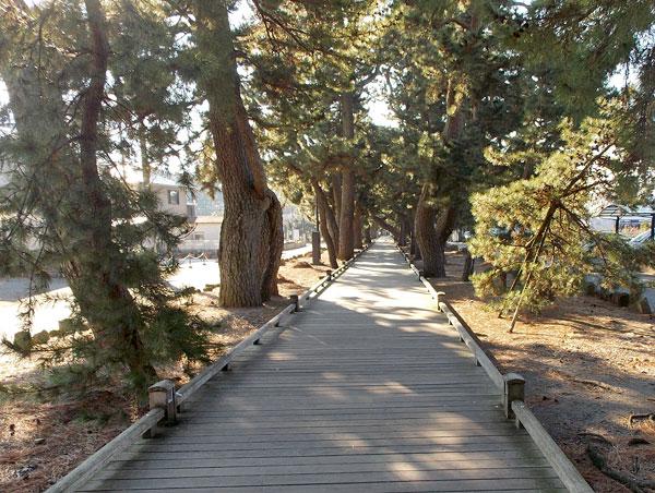 御穂神社の参道「神の道」