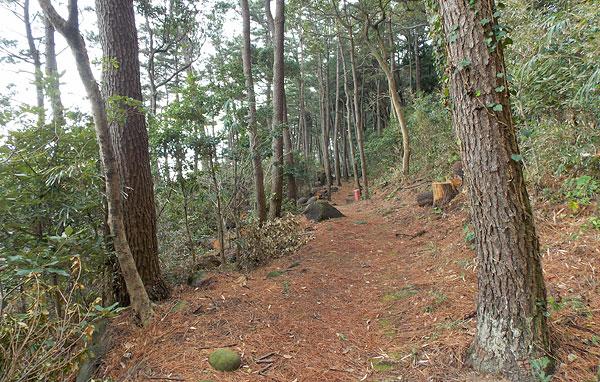松林散策路を進む