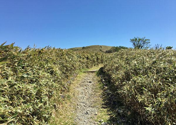 達磨山山頂が見えてきた!