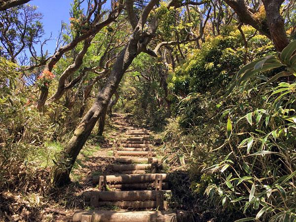 子達磨山に向かう登り坂