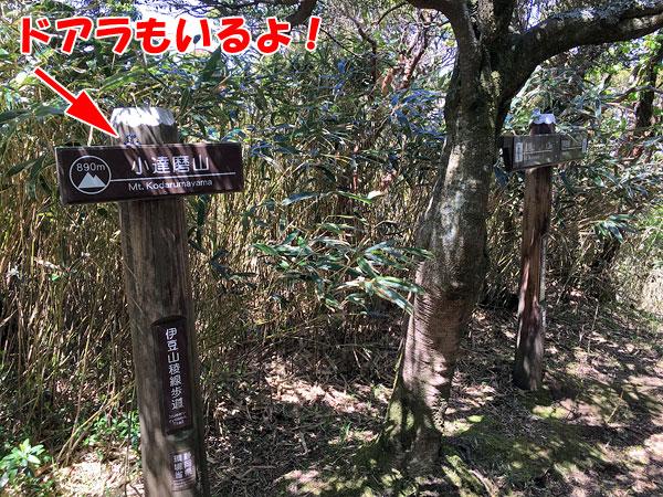 子達磨山山頂に到着
