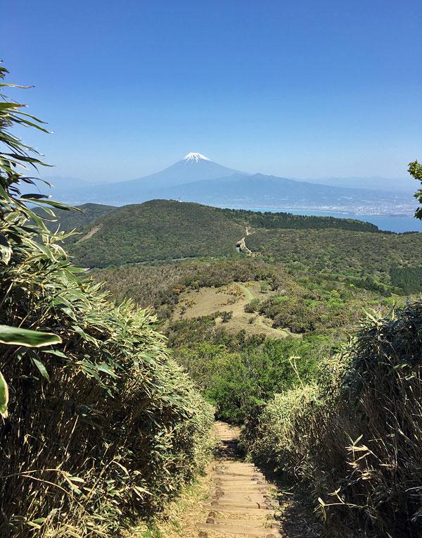森林のトンネルを抜けると真正面に富士山が見えますよ!