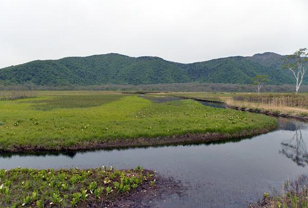 尾瀬国立公園「水芭蕉群生地」
