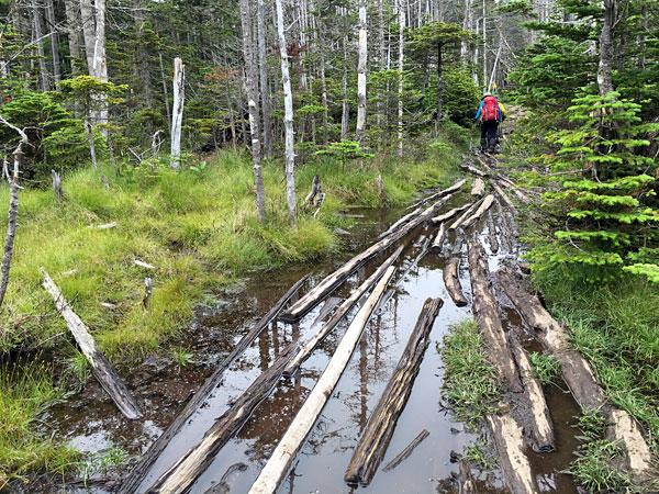 前掛山で縞枯れ現象がある密林を進みます。