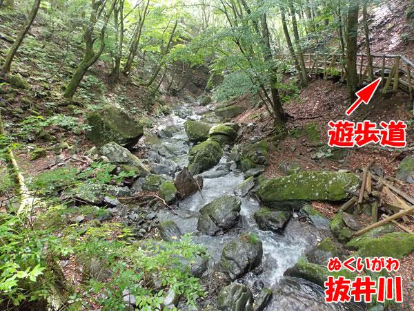 抜井川と遊歩道