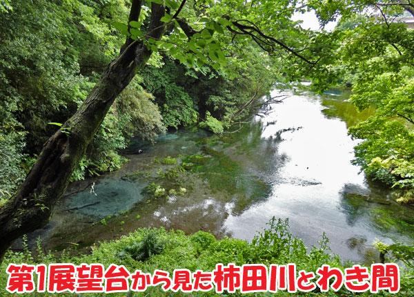 柿田川公園・第1展望台