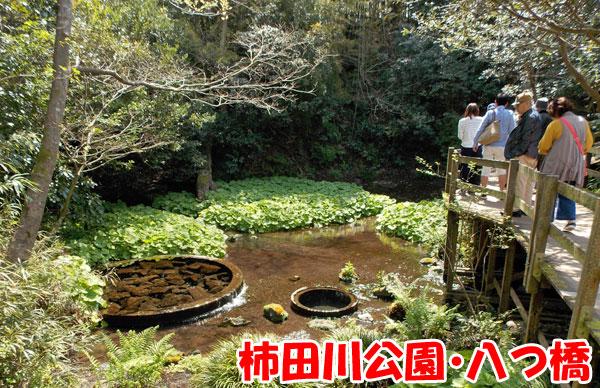 柿田川公園・八つ橋