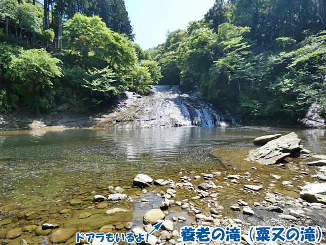 養老の滝(粟又の滝)とドアラ