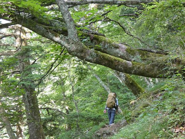 南アルプス・鳳凰三山:傾斜のキツイ登りが続く