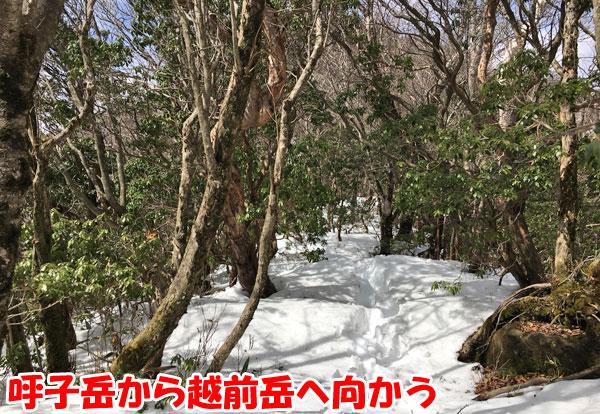 愛鷹山日帰り登山・呼子岳から越前岳へ向かう