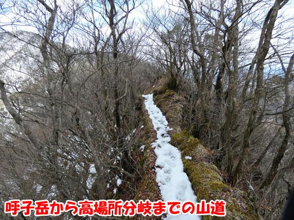 愛鷹山日帰り登山・呼子岳から高場所分岐までの山道
