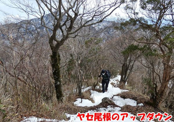 愛鷹山日帰り登山・ヤセ尾根のアップダウン