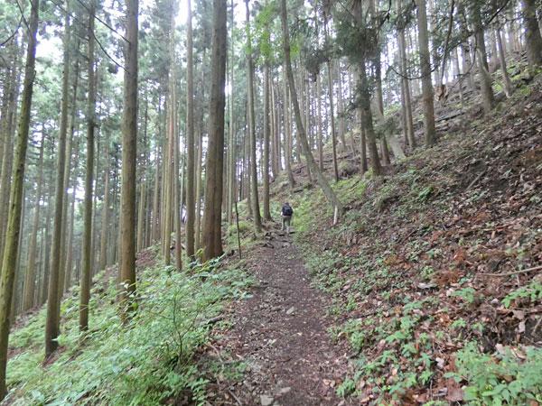 丹沢登山:大倉高原の家経由で塔ノ岳に向かう