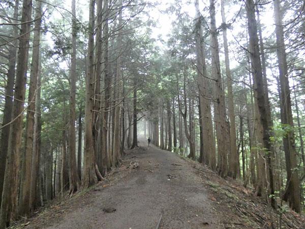 丹沢登山:雑事場ノ平から見晴茶屋へ向かいます