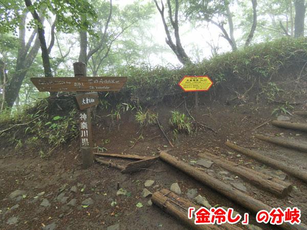 丹沢登山:金冷しの分岐