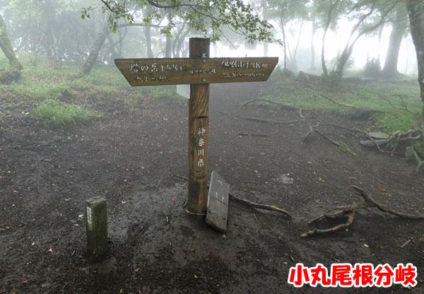 丹沢登山:小丸尾根分岐