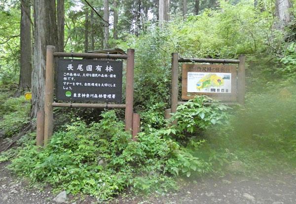 丹沢登山:丹沢緑の回廊