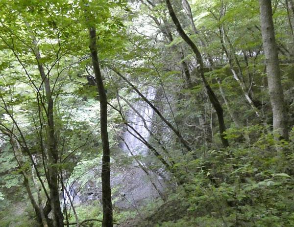 丹沢登山:丹沢緑の回廊から二俣へ向かう