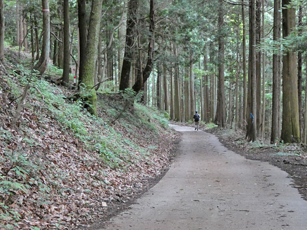 丹沢登山:二俣から大倉へ向かう