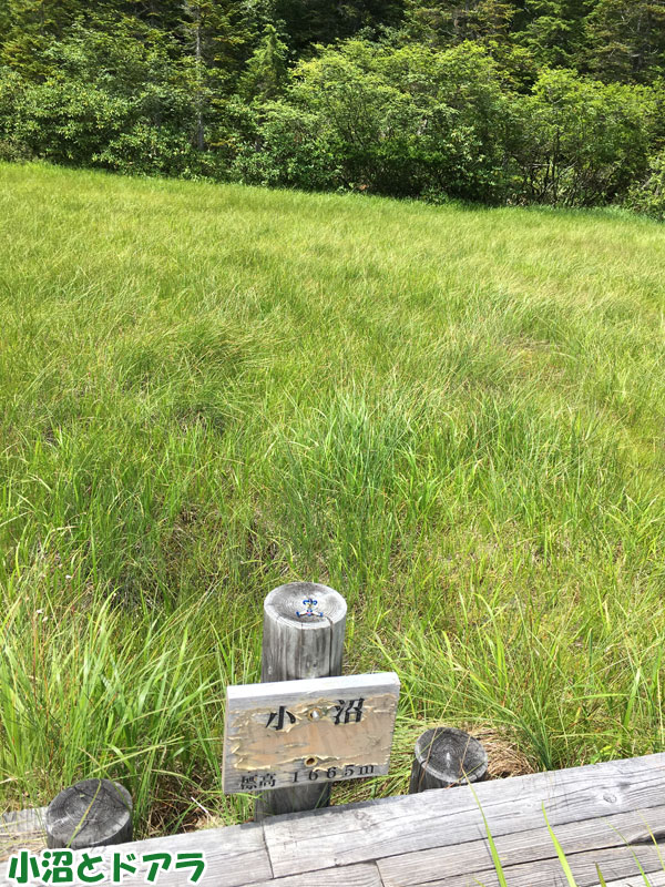小沼(標高1665m)とドアラ