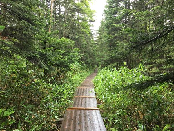 長蔵小屋へ向かう木道は雨で濡れていました