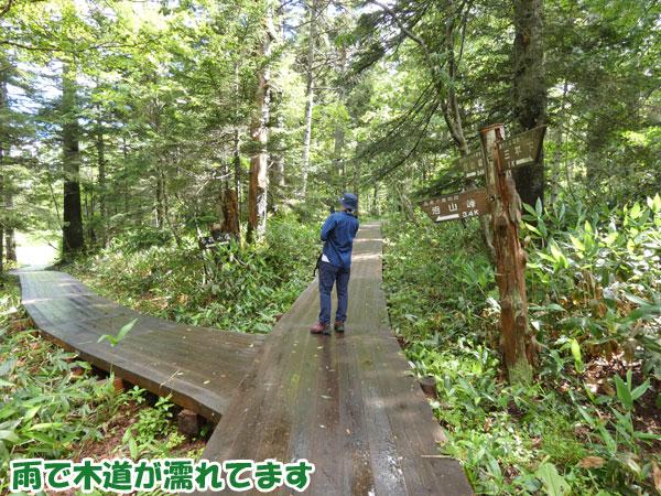 雨で木道が濡れてます