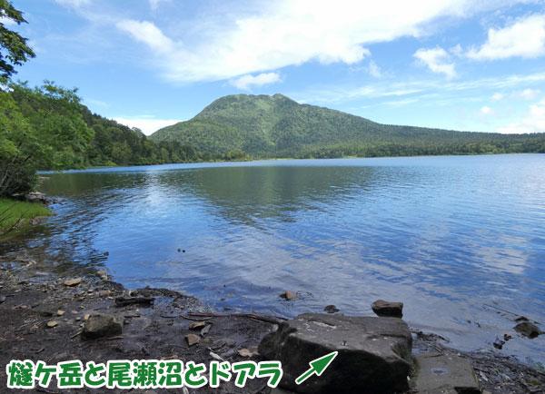 尾瀬沼の水辺まで行けるところがありました。