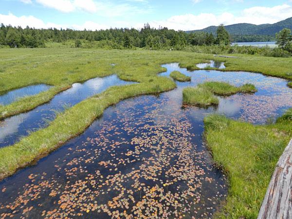沼尻平にて池塘が広がる湿原