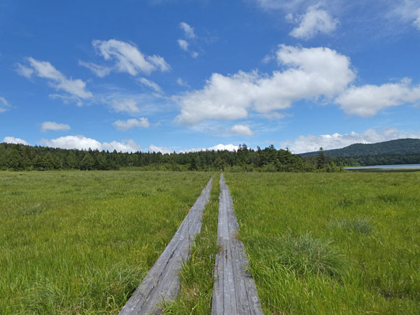 浅湖湿原方面に続く木道