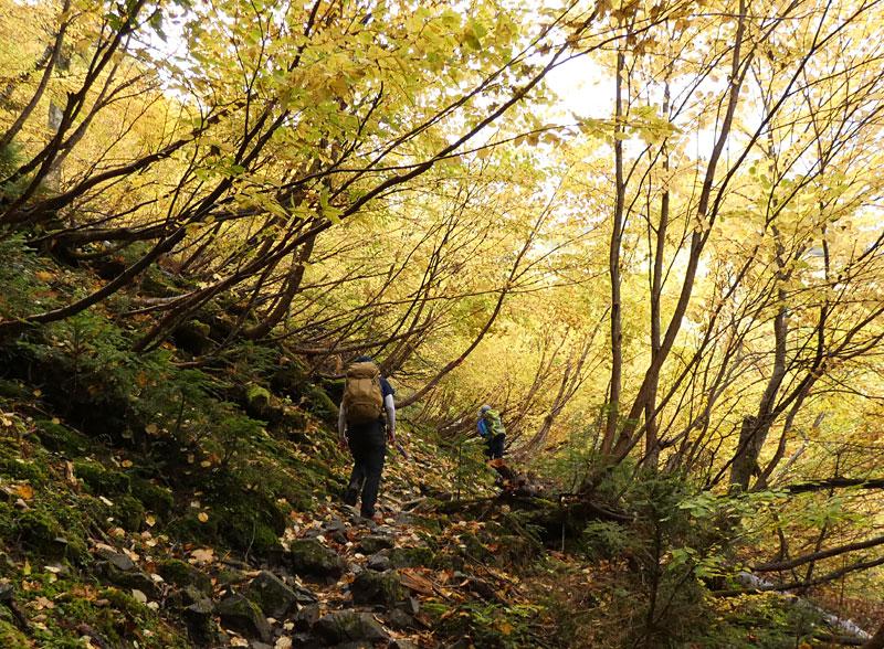 藪沢新道・黄色く紅葉したトンネル