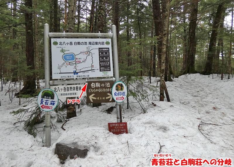青苔荘と白駒荘への分岐