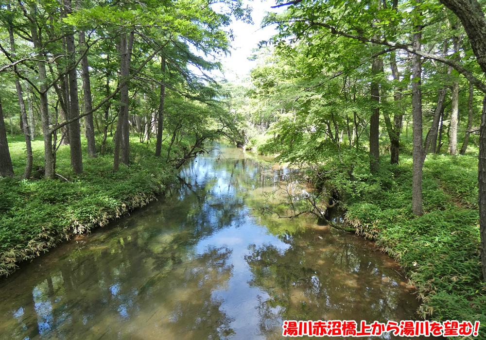 戦場ヶ原・湯川赤沼橋上から湯川を望む!