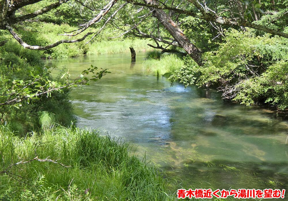 戦場ヶ原・青木橋近くから湯川を望む!